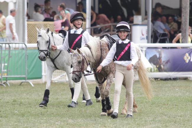 Horses at last year's Royal Welsh Show in Llanelwedd. Picture: Mike Sheridan/County Times