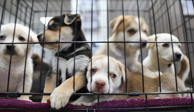 Action call on puppy farms.
