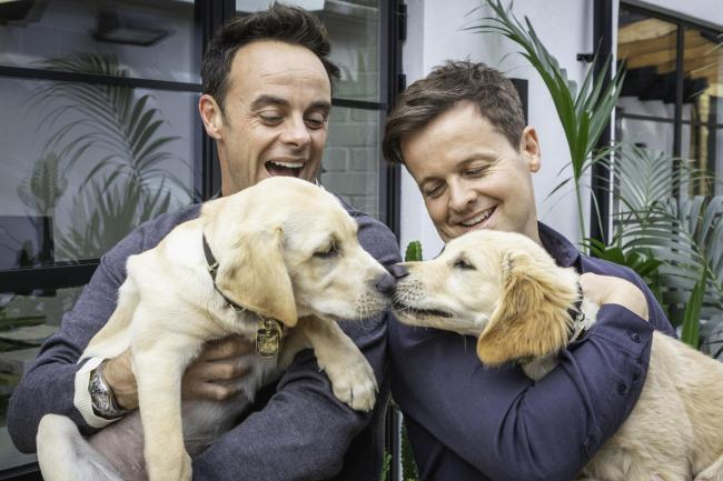 Ant and Dec with the guide dog puppies named after them
