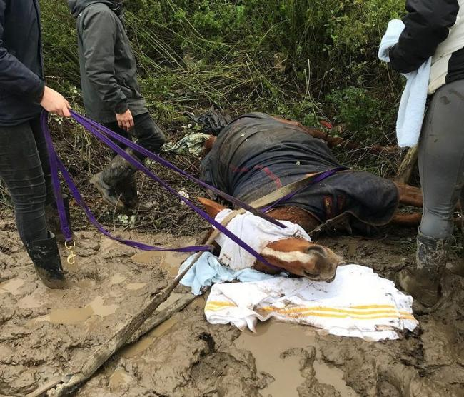 A horse was found impaled on a fence in Holywell after it is believed it was spooked by fireworks.