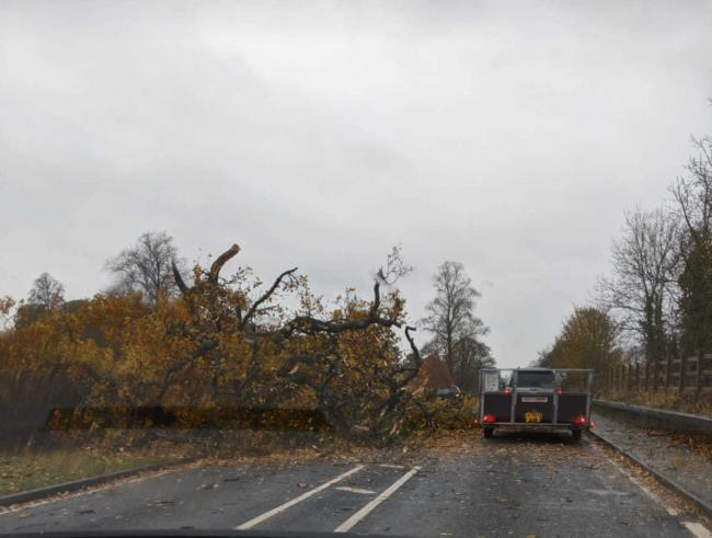 A tree has come down on the A458 in Coed-y-Dinas, Welshpool. Picture: Graeme Paddison.