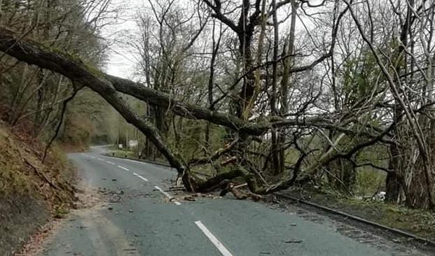 A tree blocked the B4390 between Berriew and Manafon during Storm Ciara on Sunday, February 9. Picture by Rachael Mead.