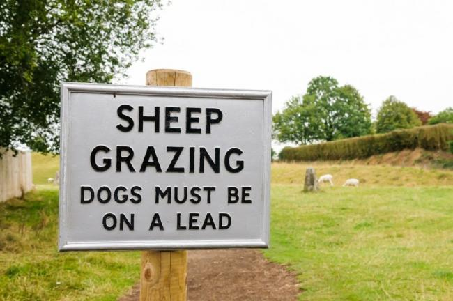 Police are urging dog owners to control their pet after livestock attacks in North Yorkshire