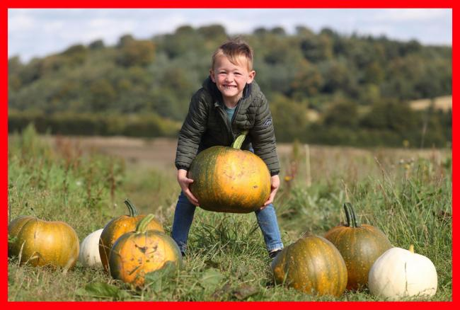 PABest Four year old Harris Stevenson from Fife loads up a wheelbarrow at Craigies Farm in Queensferry which will be opening up their pumpkin fields for the tenth consecutive year to visitors who can pick their own pumpkins this October. Visitors can choo