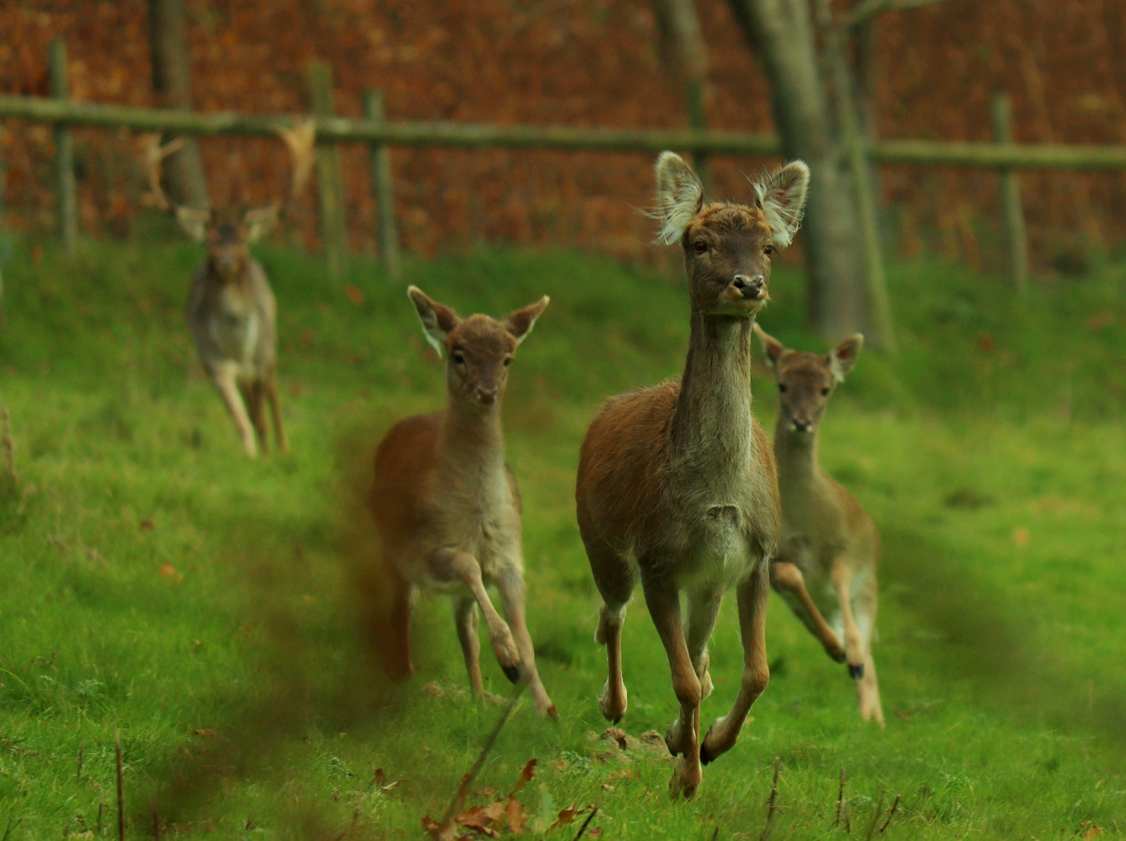 High quality entries hailed for Knighton nature photography contest