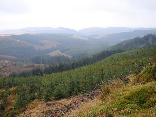 Forest of Hafren.  Image: Wikipedia.