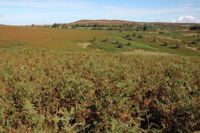Mynydd Fforest.  Photo by Philip Halling / geographer.