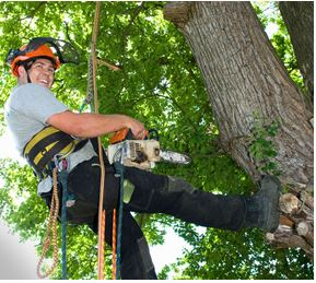 Paul Thomas Tree Surgeons