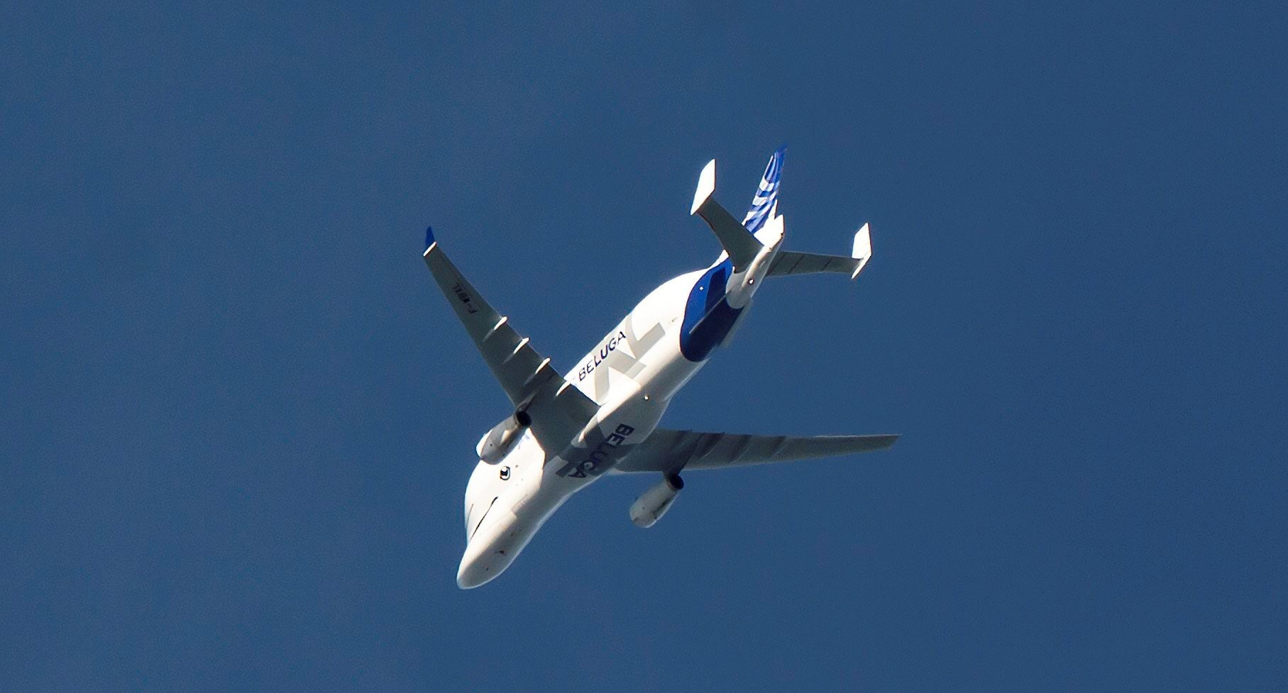 Beluga XL flies over Newtown. Picture: Frank Moore.